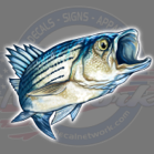 striper rock fish decal