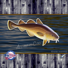 atlantic cod fish decal