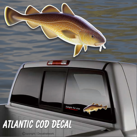 atlantic cod fish window decal