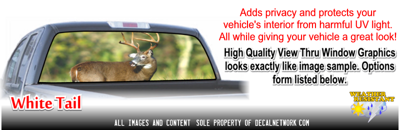 whitetail deer window graphic